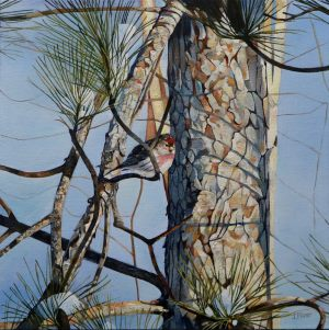 "Redpoll and Pine 20""x20""<span class=""sold"">•</span>"