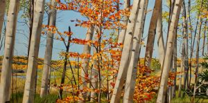 "October Maple Emergence 24""x48""<span class=""sold"">•</span>"
